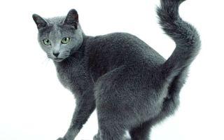 Как отучить кота метить территорию в доме