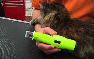 Как выбрать когтерезку для кошек