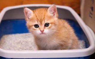 Вазелиновое масло при запорах у кошек