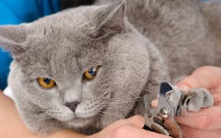 Как подстричь когти кошке в домашних условиях