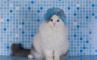 Как правильно мыть кошку и как часто можно ее купать