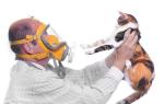 Топ-10 гипоаллергенных пород кошек