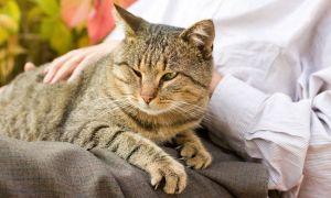 Сколько в среднем живут кошки и коты
