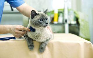 Почечная недостаточность у кошек: симптомы, формы и лечение