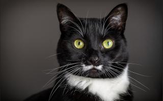 Зачем коту усы и почему они ломаются