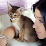 котенок хауси (чаузи)