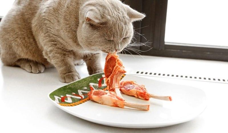Мочекаменная болезнь у котов_диета