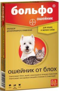 Как выбрать ошейник от блох и клещей для кошек