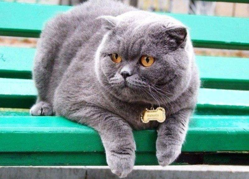Как выбрать ошейник для кошки