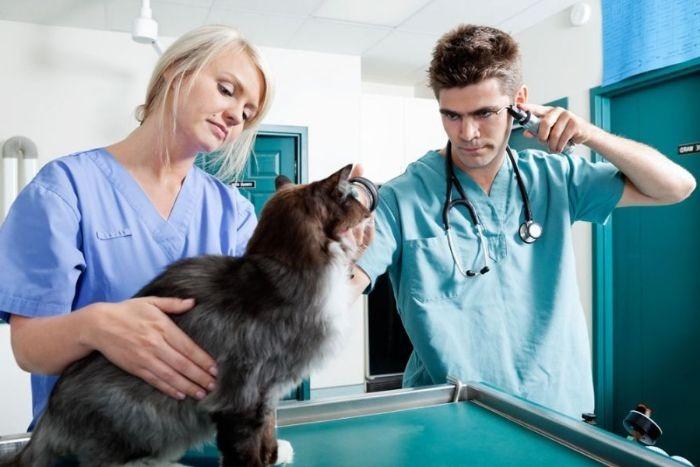 Симптомы эпилепсии у котов и оказание первой помощи