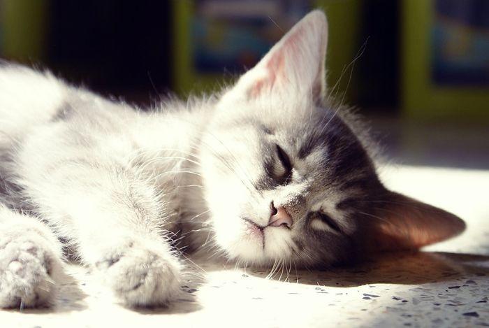 Стоматит у кошек: виды, симптомы и лечение
