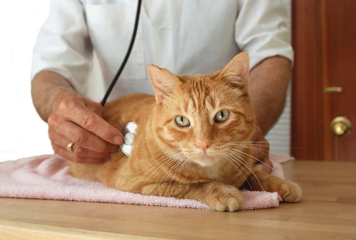 Кошки прививки от хламидиоза
