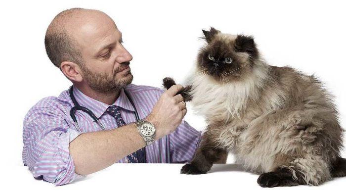 Сахарный диабет у кошек: симптомы, лечение и питание