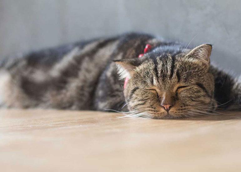 Больной-кот