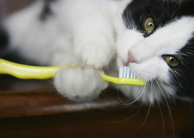 Кот чистит зубы