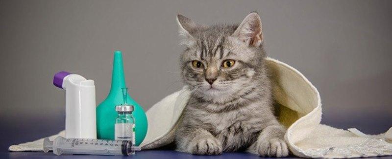 Слабительное для кошек в домашних условиях, дюфалак и лактусан