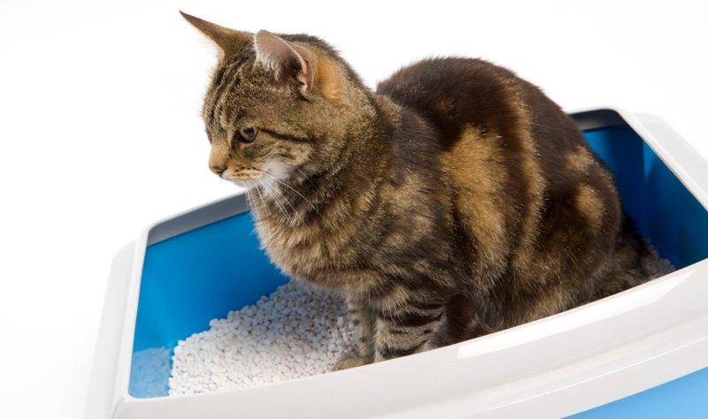 Слабительное для кошек в домашних условиях: дюфалак и лактусан, дозировка, инструкция по применению