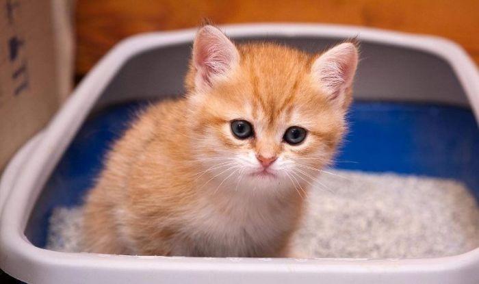 Какой наполнитель для кошачьего туалета лучше выбрать