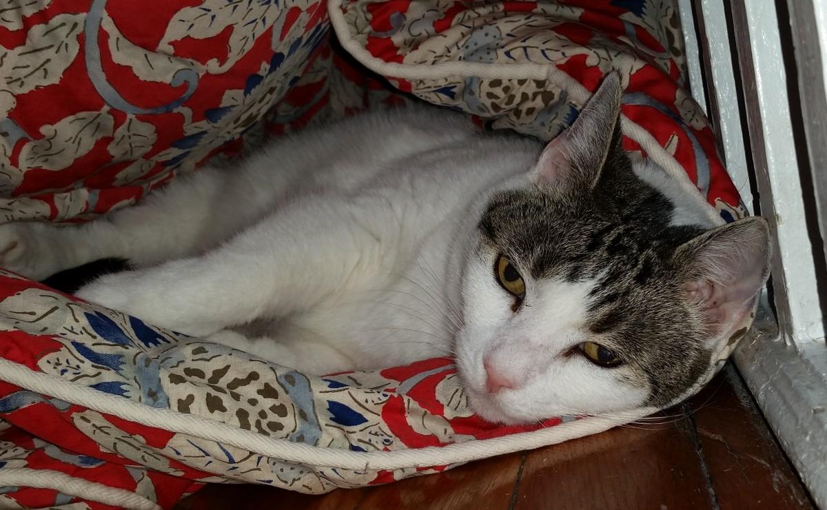 Цефтриаксон для кошек: инструкция по применению