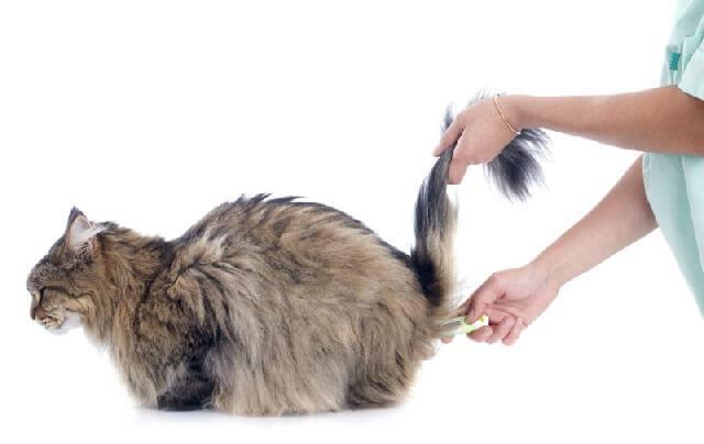 Как понять что у кошки температура