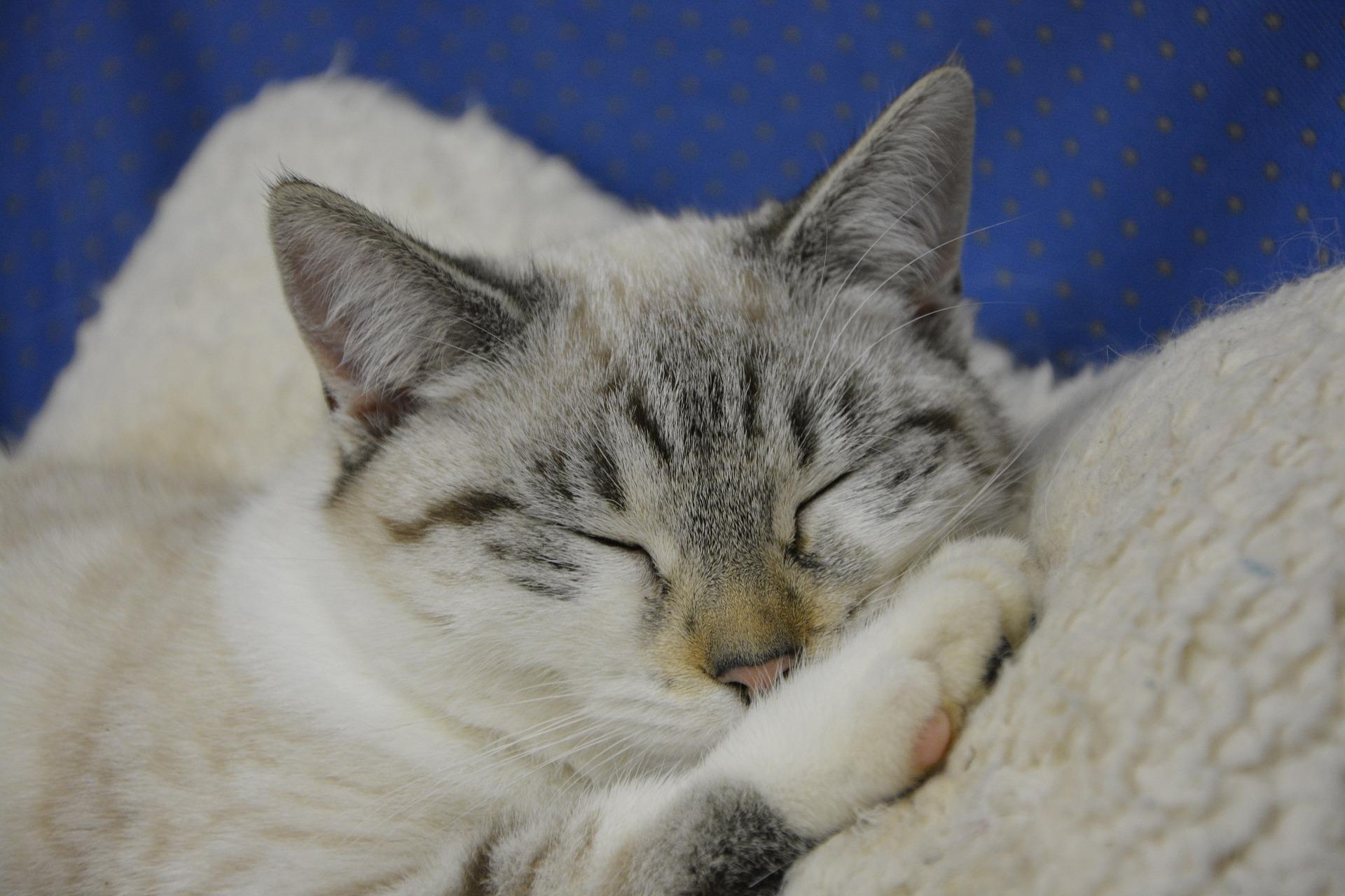 Клотримазол для кошек