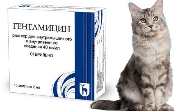 Антибиотики для кошек при инфекции