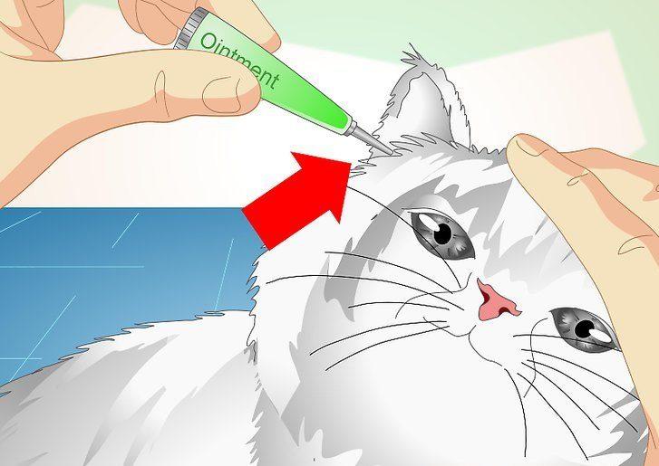 Как выбрать капли от ушного клеща для кошек