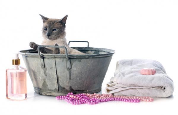 Сколько раз можно мыть кошку шампунем. Нужно ли мыть кошек. Особенности купания длинношерстных кошек