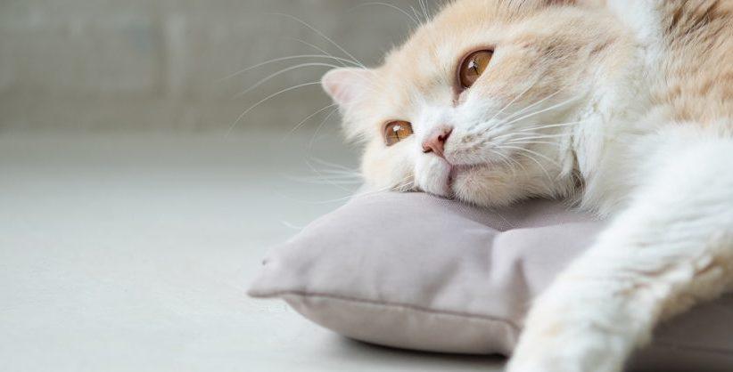 Какая нормальная температура тела должна быть у кошки