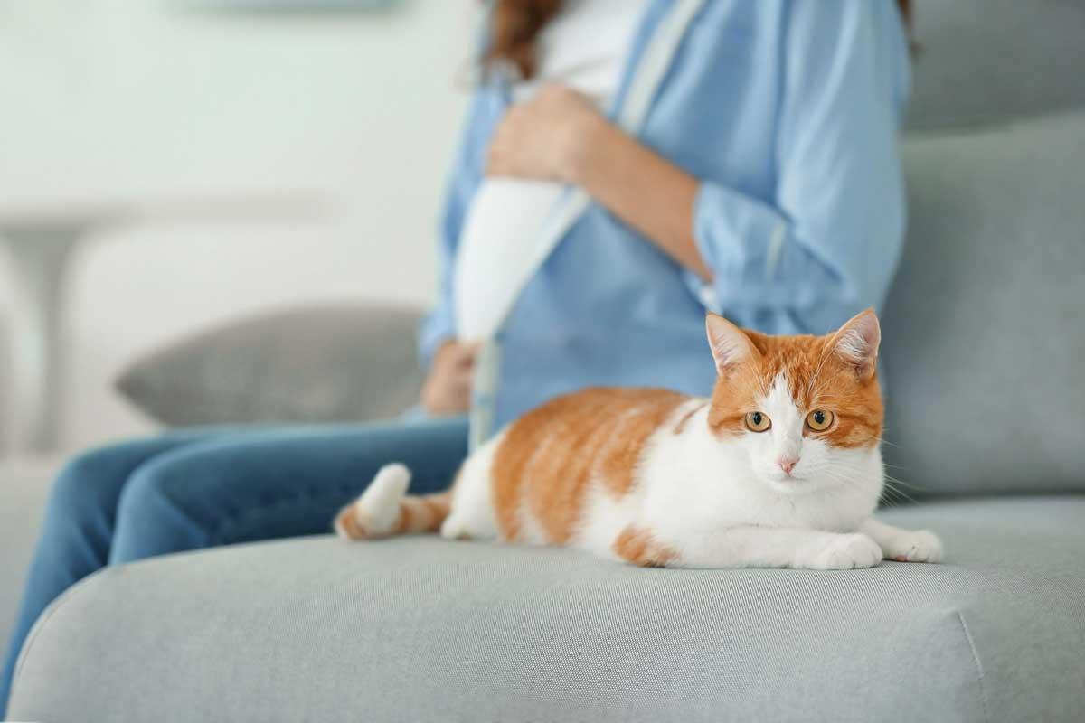 Токсоплазмоз у кошек: симптомы и лечение